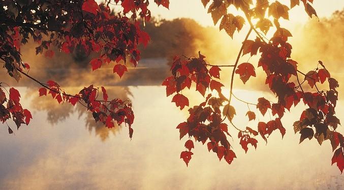 Autumn Leaves, New England USA